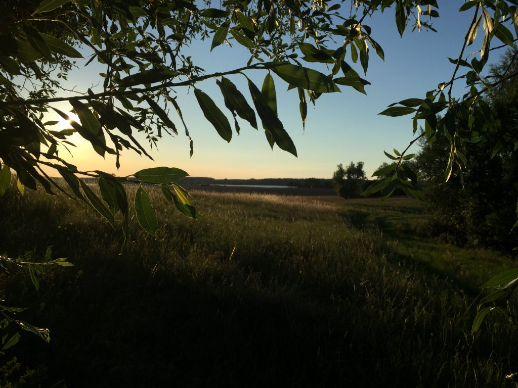 Morgens am Polchower Busch